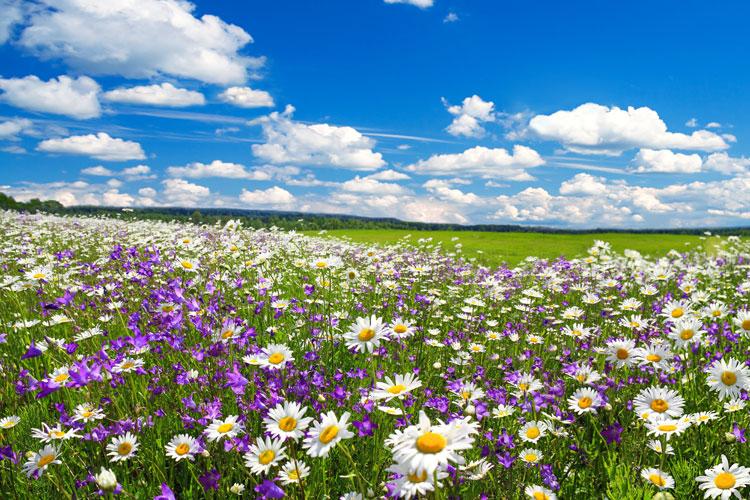 fioritura.jpg